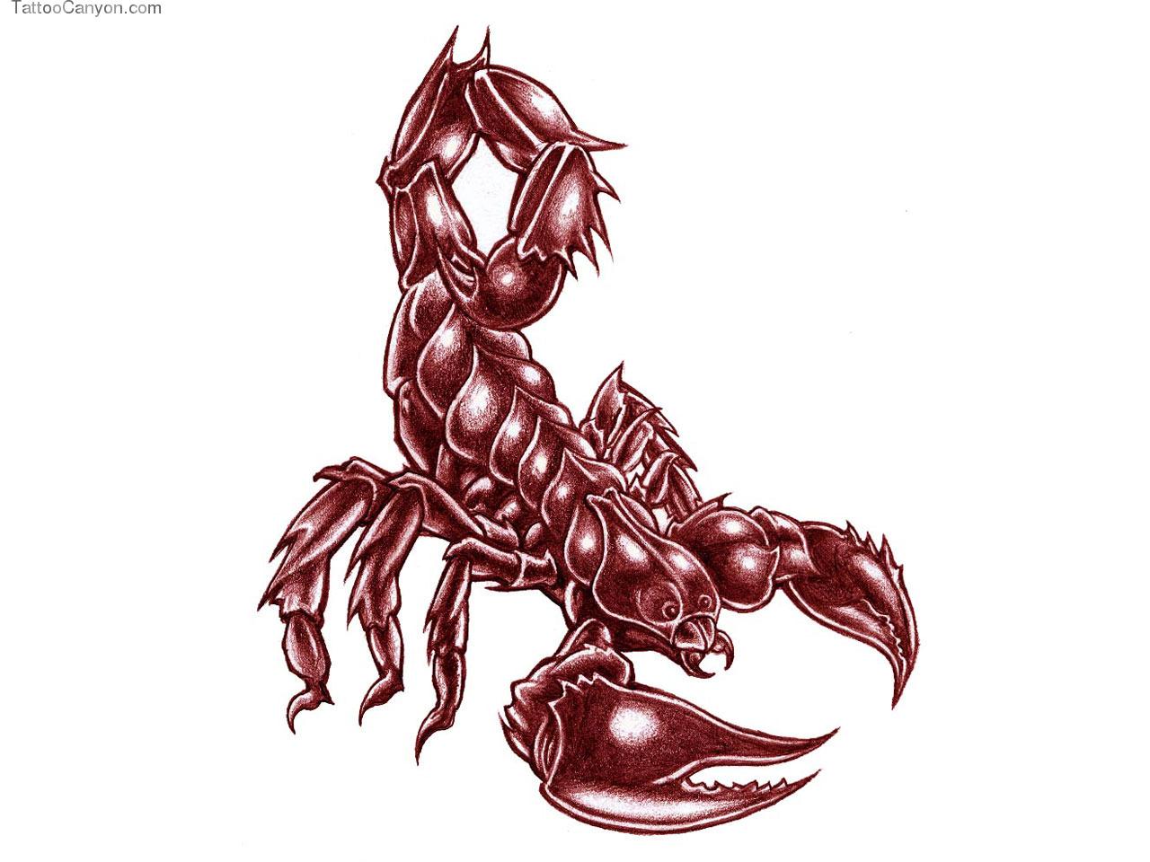 Designs Big Bold Scorpion Tattoo Wallpaper Picture 5610 1280x960