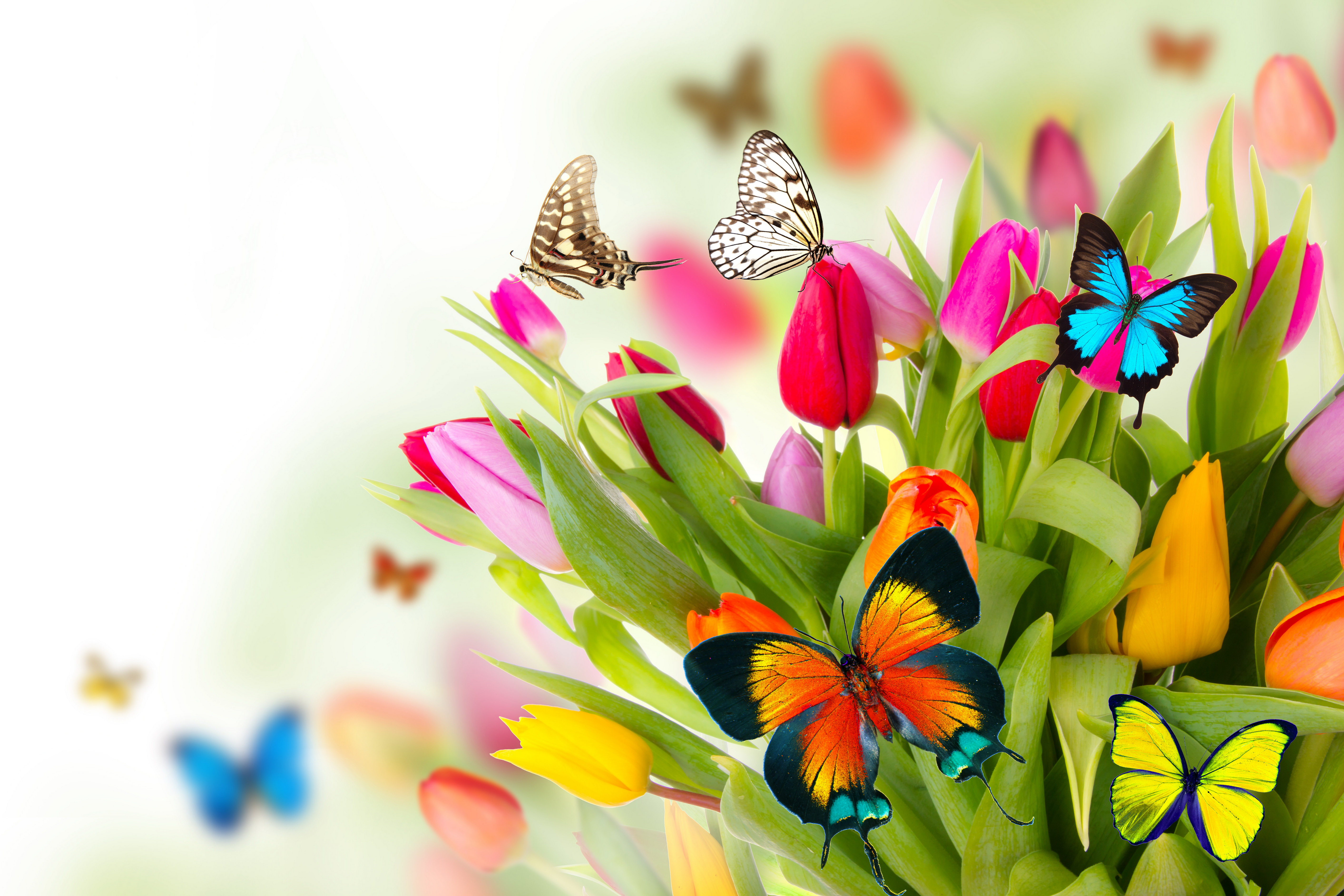 Spring Flowers Desktop Background wallpapers HD   498695 5650x3767