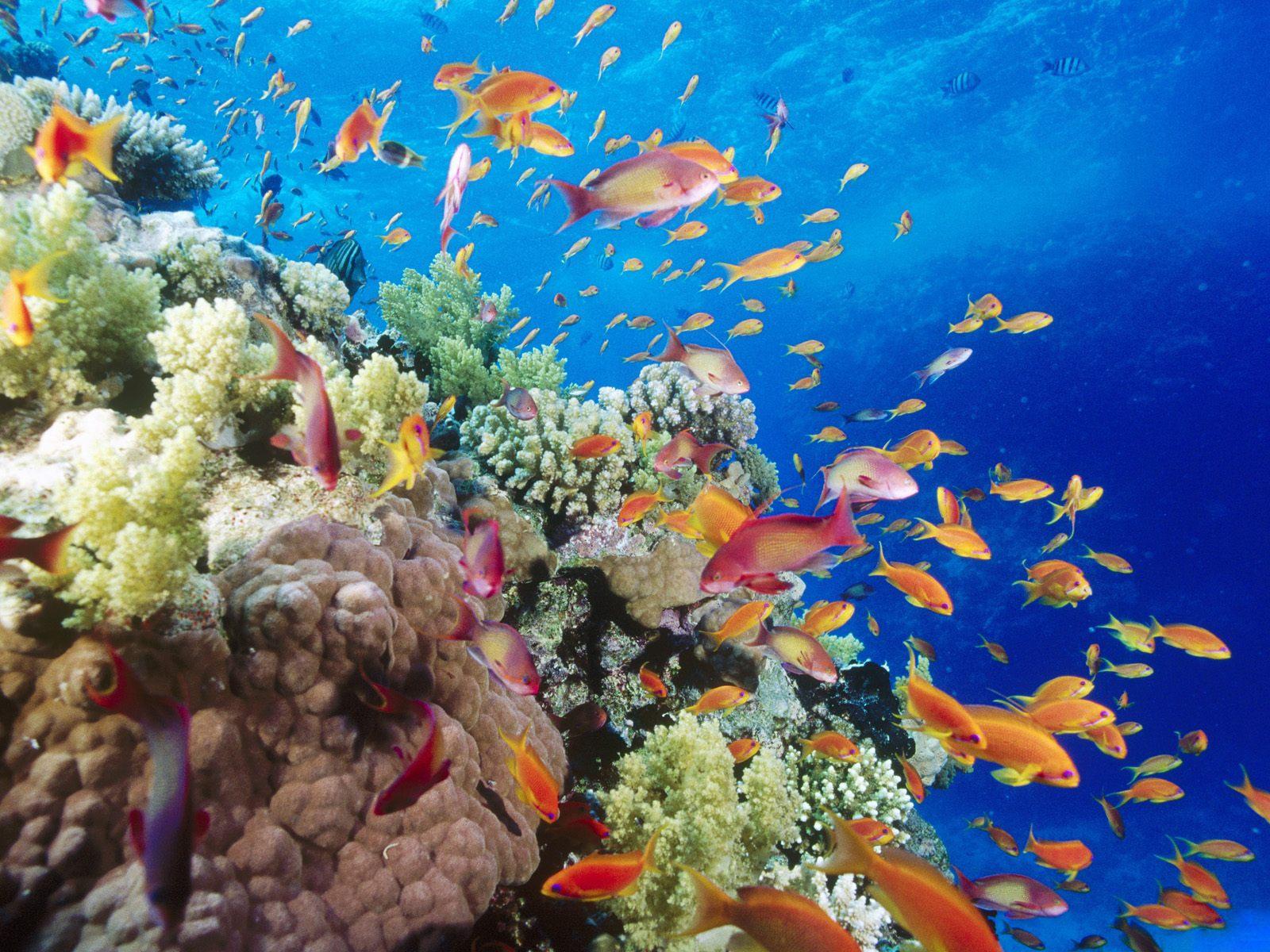 Various deep sea fish underwater wallpaper 1600x1200