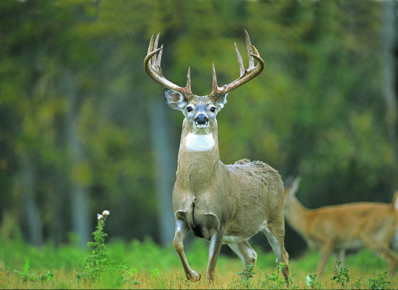 Deer 57604209 Wallpaper 855687 5760x4209