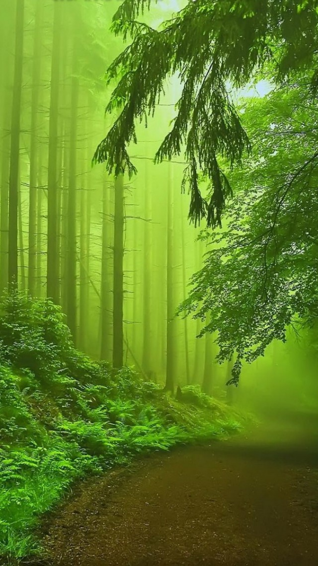 Free Download Forest Fog Green Iphone 5s Wallpaper Download Iphone