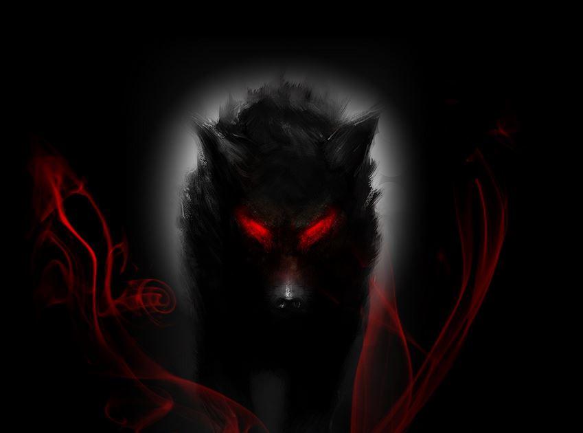 Black Wolf Wallpaper Hd HD Special Wallpapers Pleasing 6 www 849x630