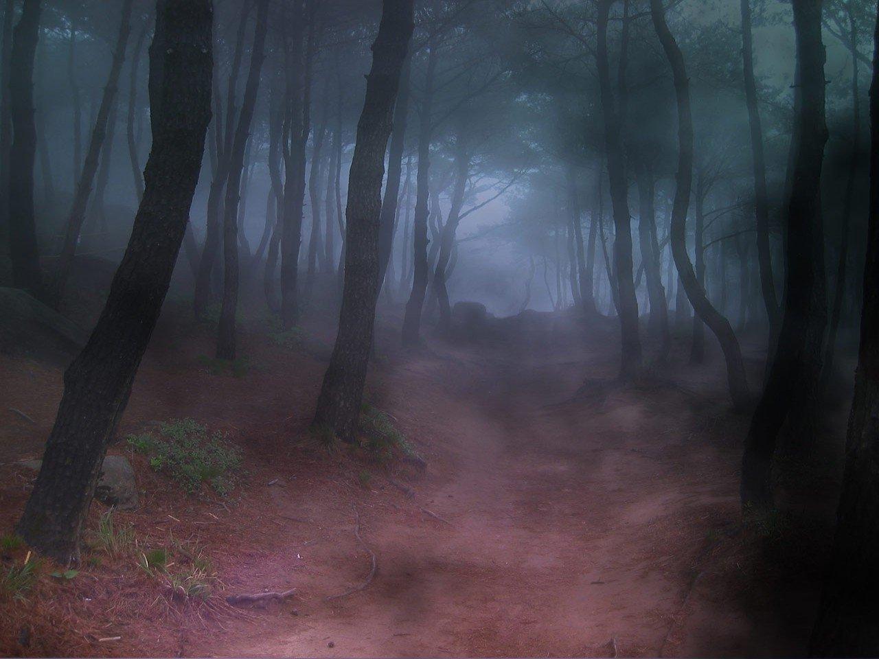 FOREST FOG 1280x960