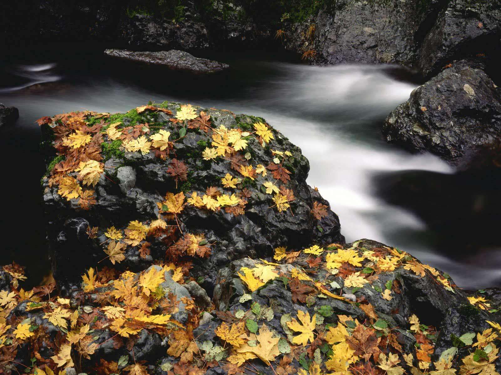 backgrounds Animal Life Nature River Rock Wallpapers 1600x1200