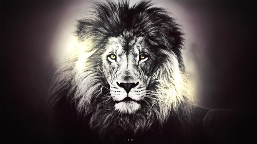 45 Powerful Lion Wallpapers for Your Desktop 500x281
