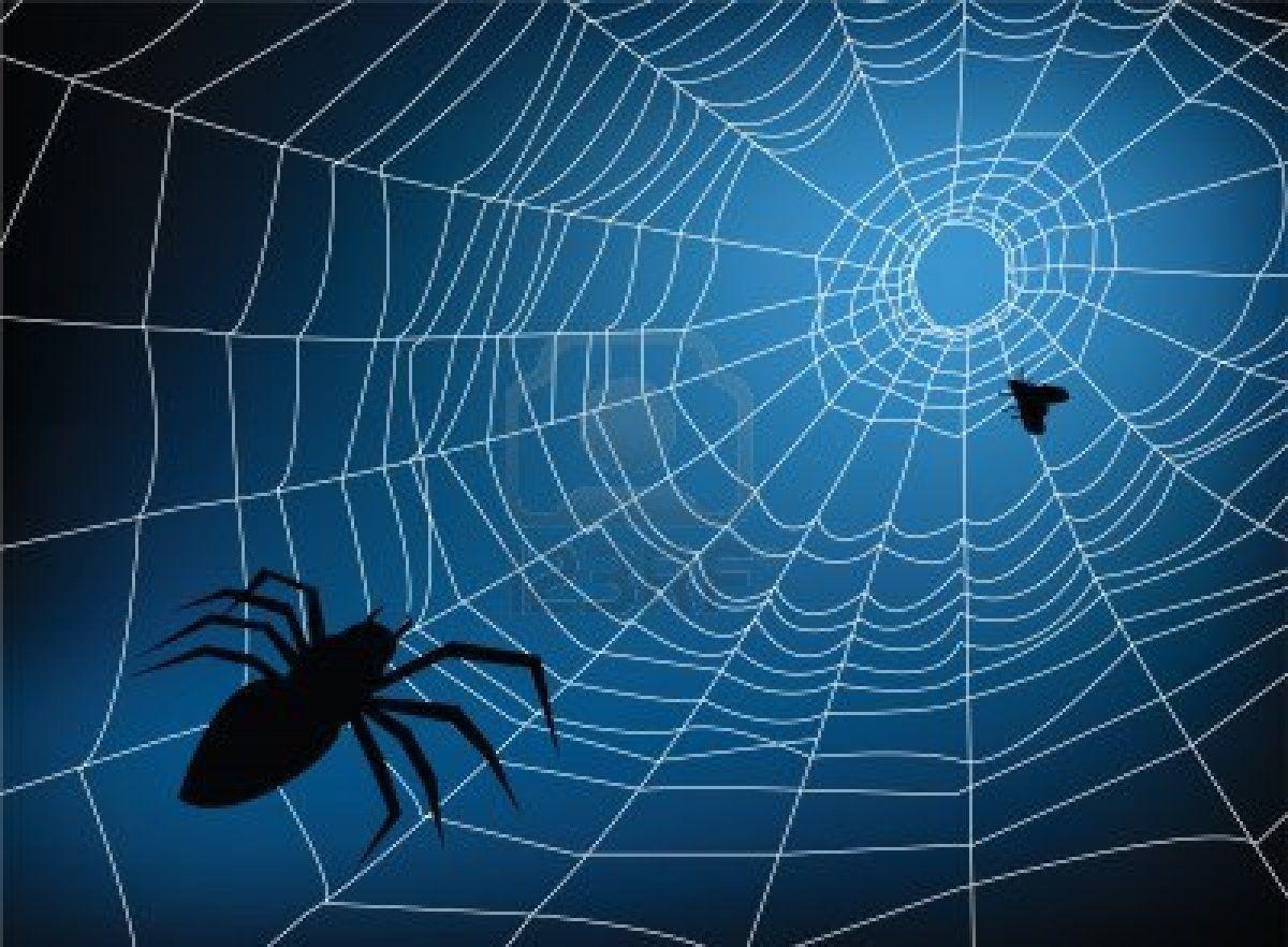 Spiderweb Backgrounds 1200x882