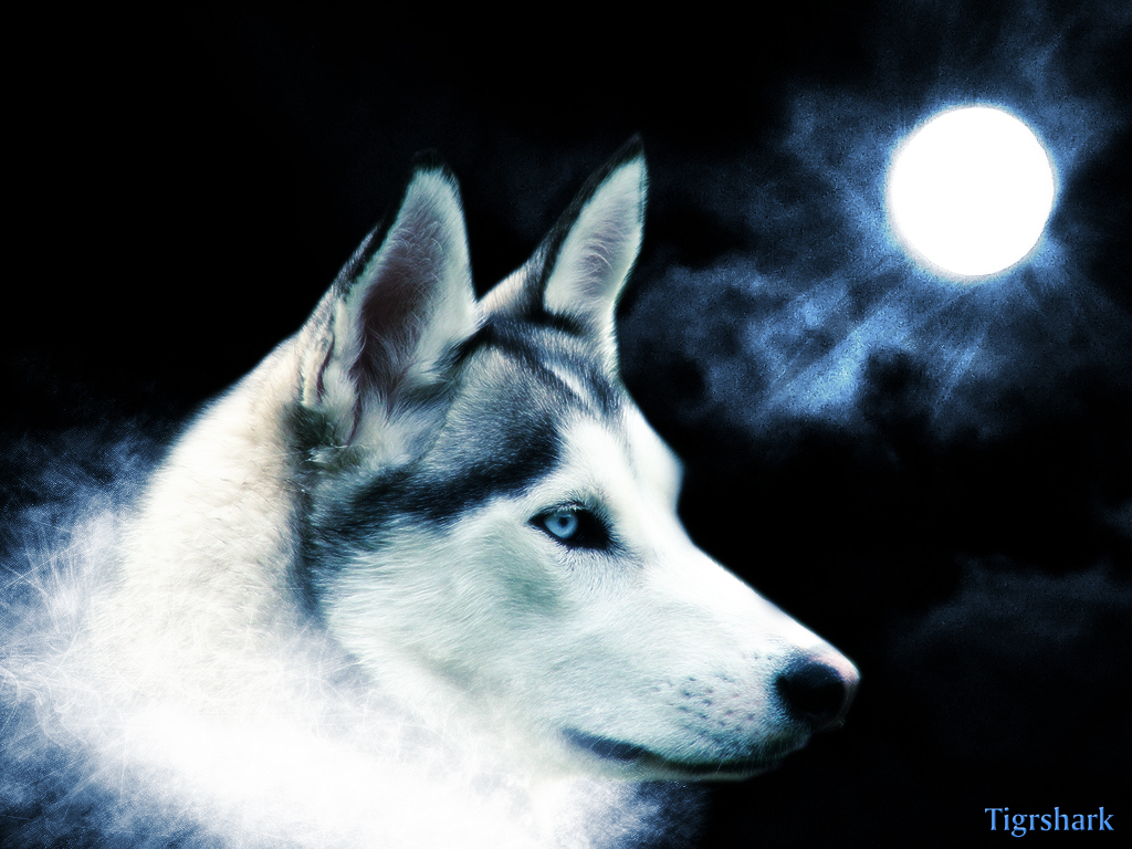 1287650821 1024x768 artistic grey wolf wallpaperjpg 1024x768