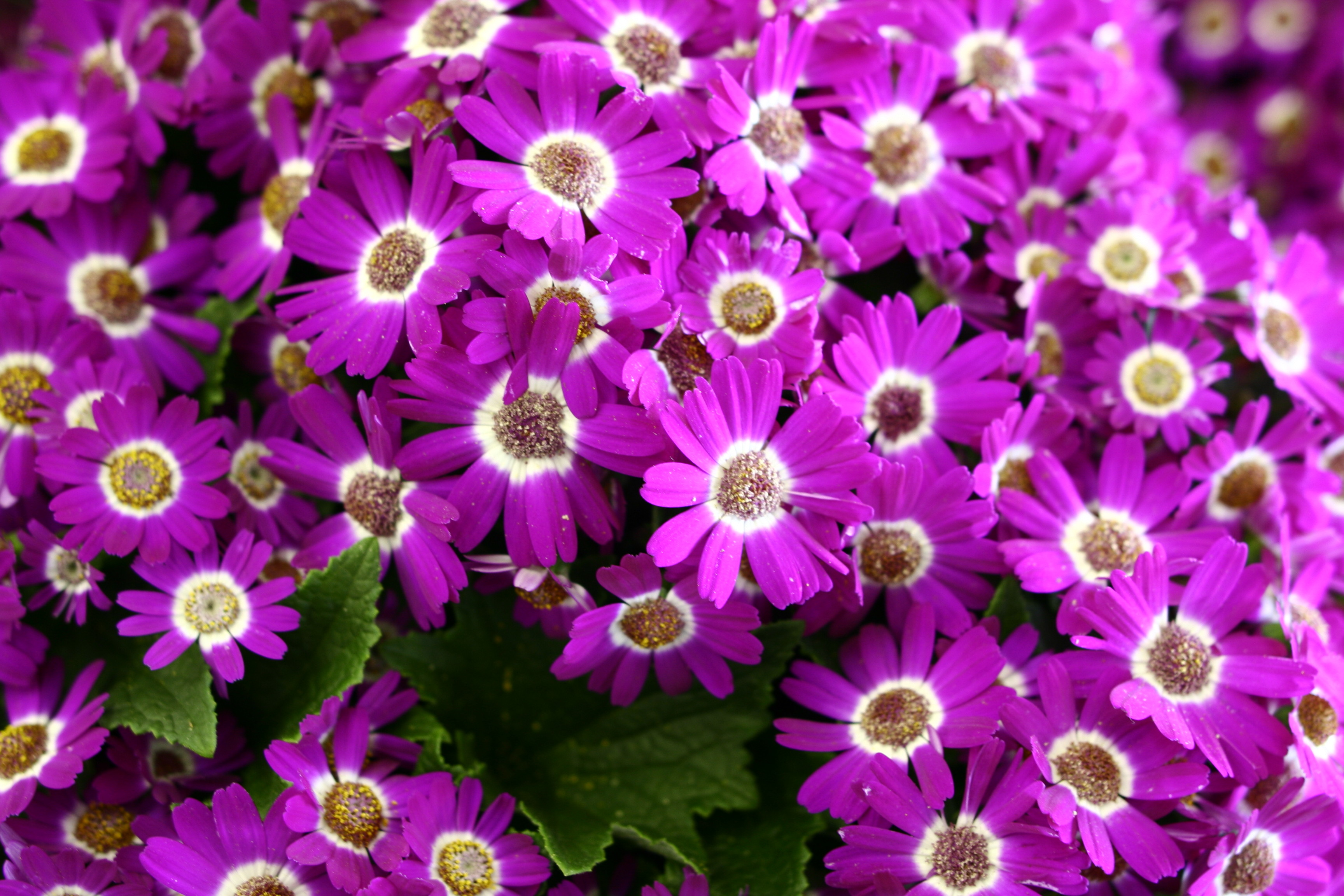 Purple Pink Spring Flowers Flowers Nature Pictures by 3456x2304