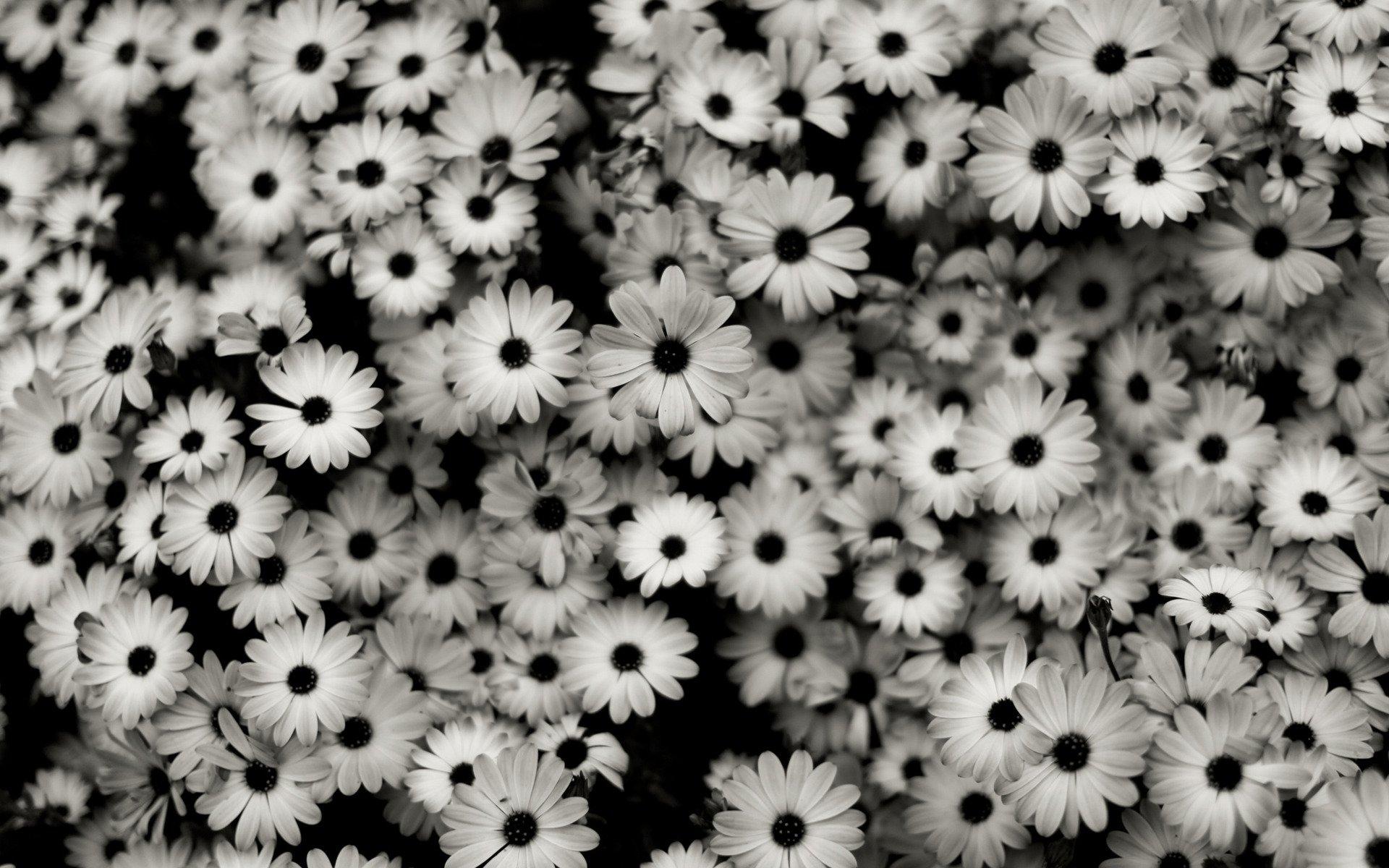 similar desktop black and white flower picture wallpaper desktop black 1920x1200