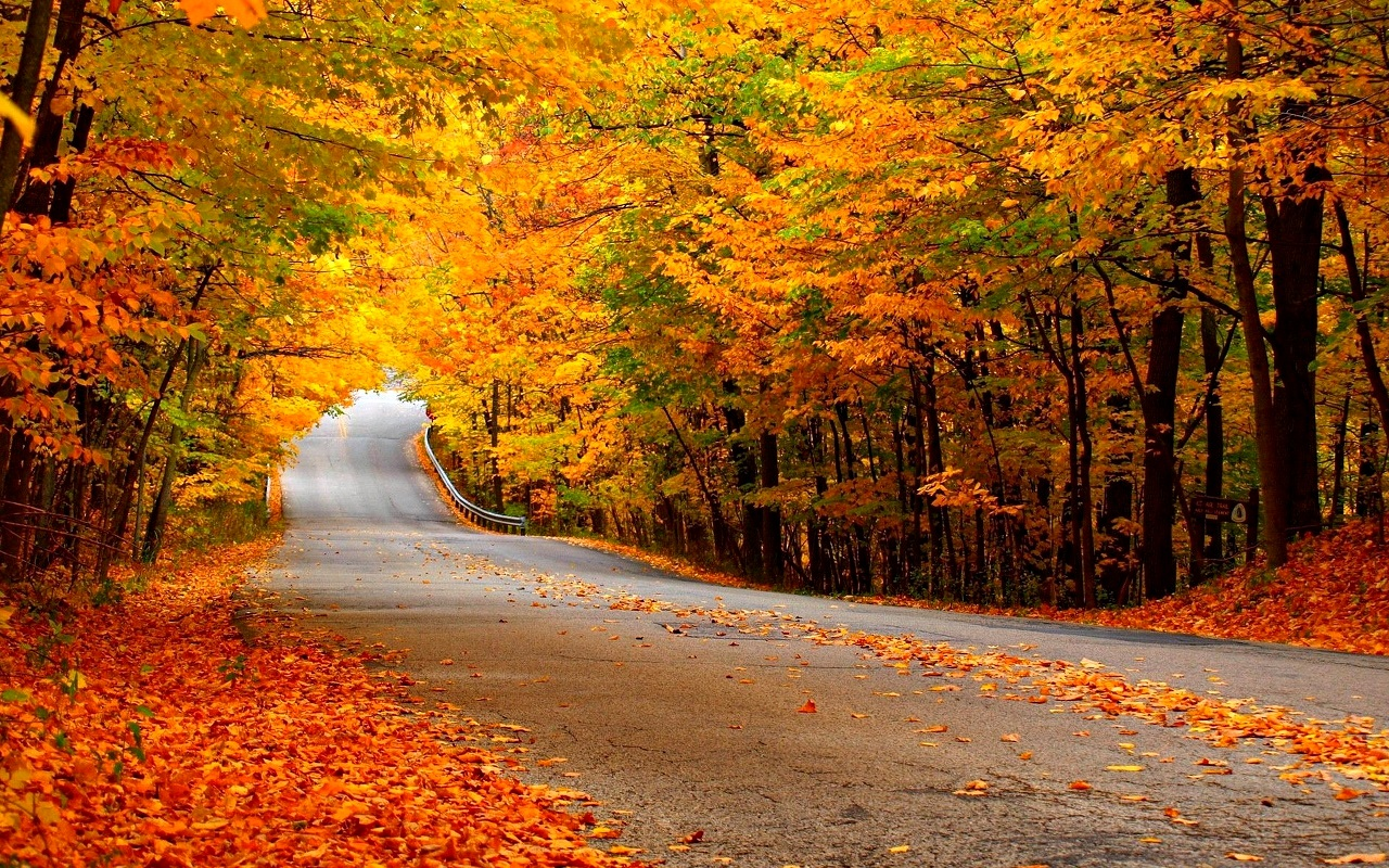 Autumn Wallpaper   Autumn Wallpaper 35867710 1280x800
