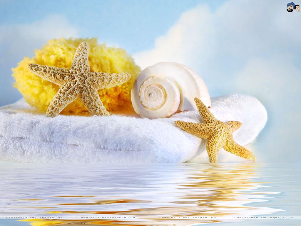 Seashells wallpaper 24 - Seashells Wallpaper Seashells