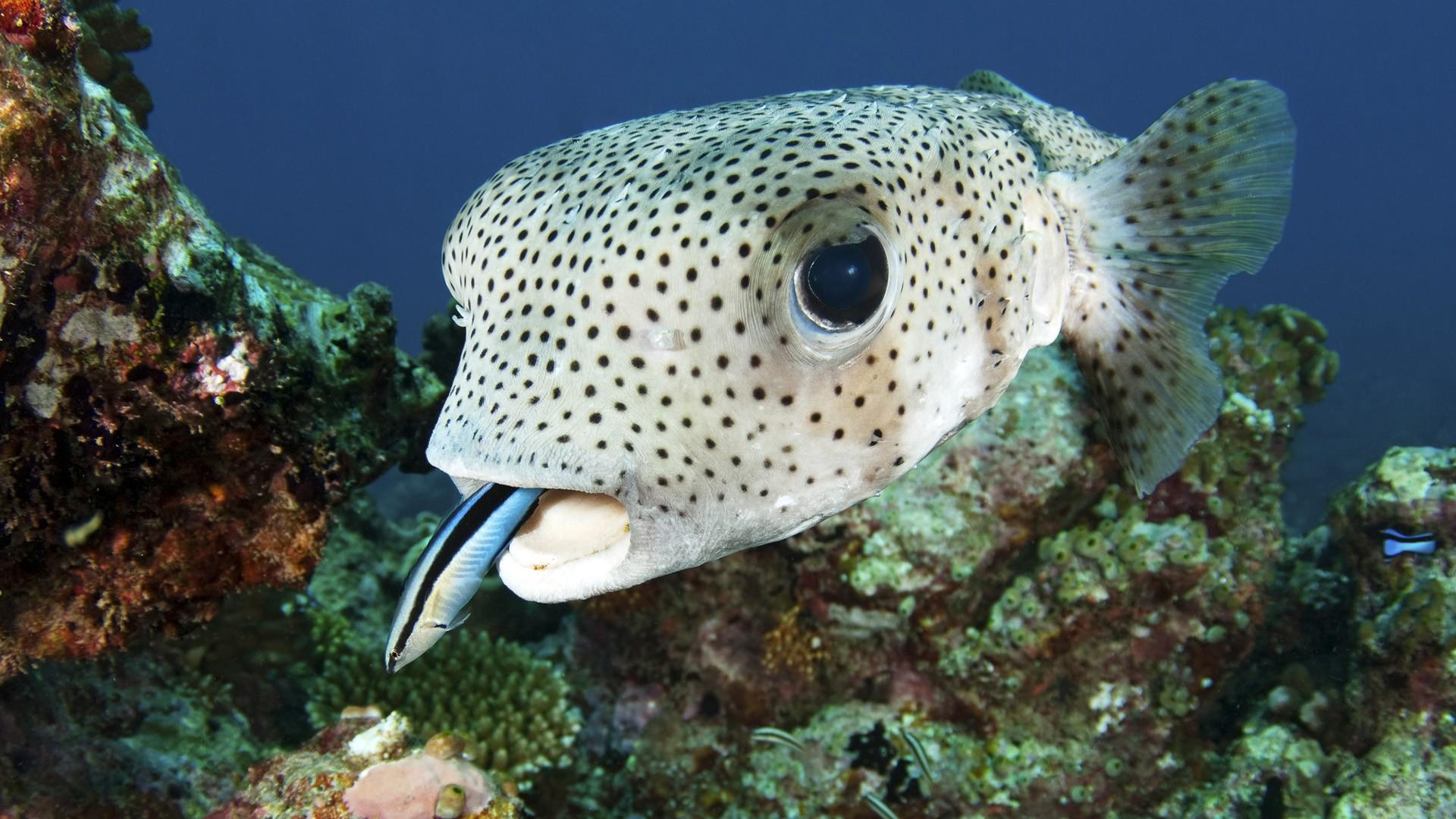 cute fish wallpaper - photo #19