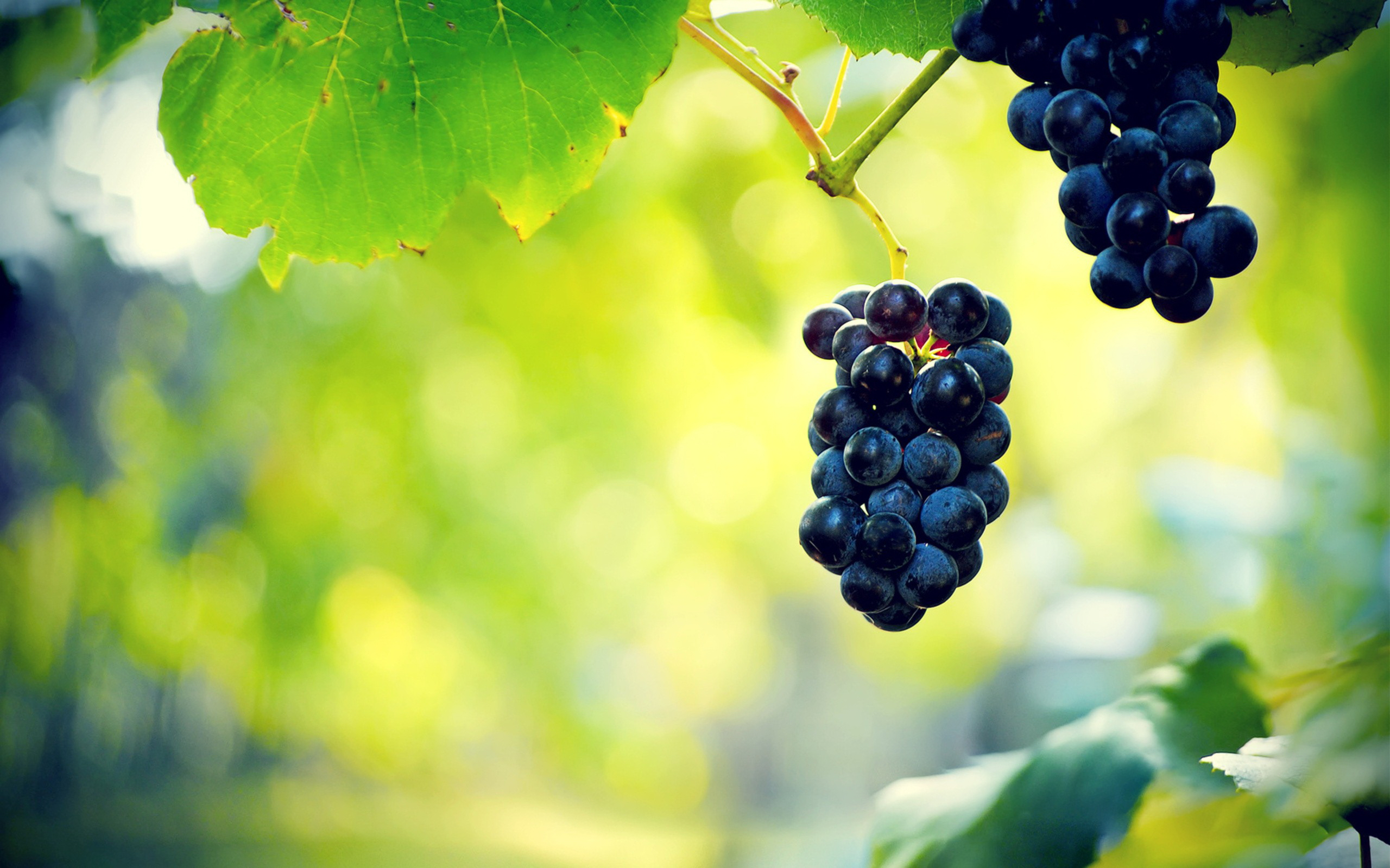 Grapes Wallpapers 2560x1600