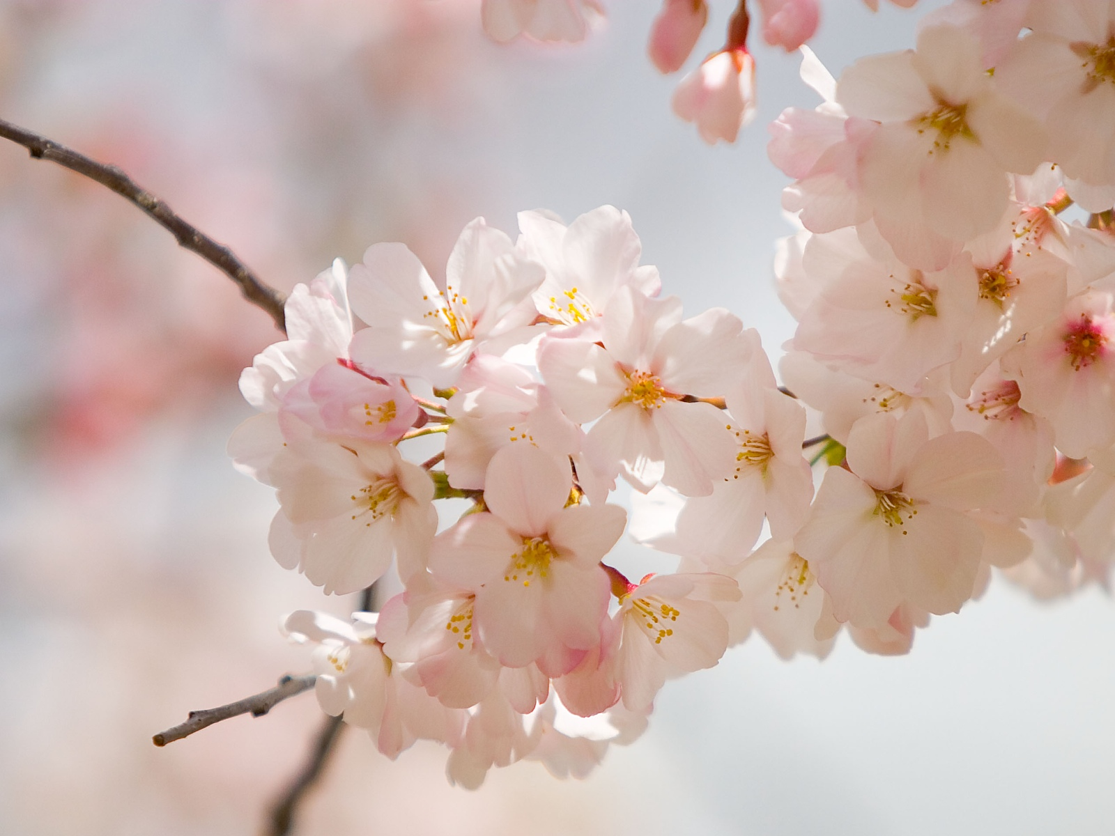Amazing Spring Flowers Wallpapers 521 Entertainment World 1600x1200