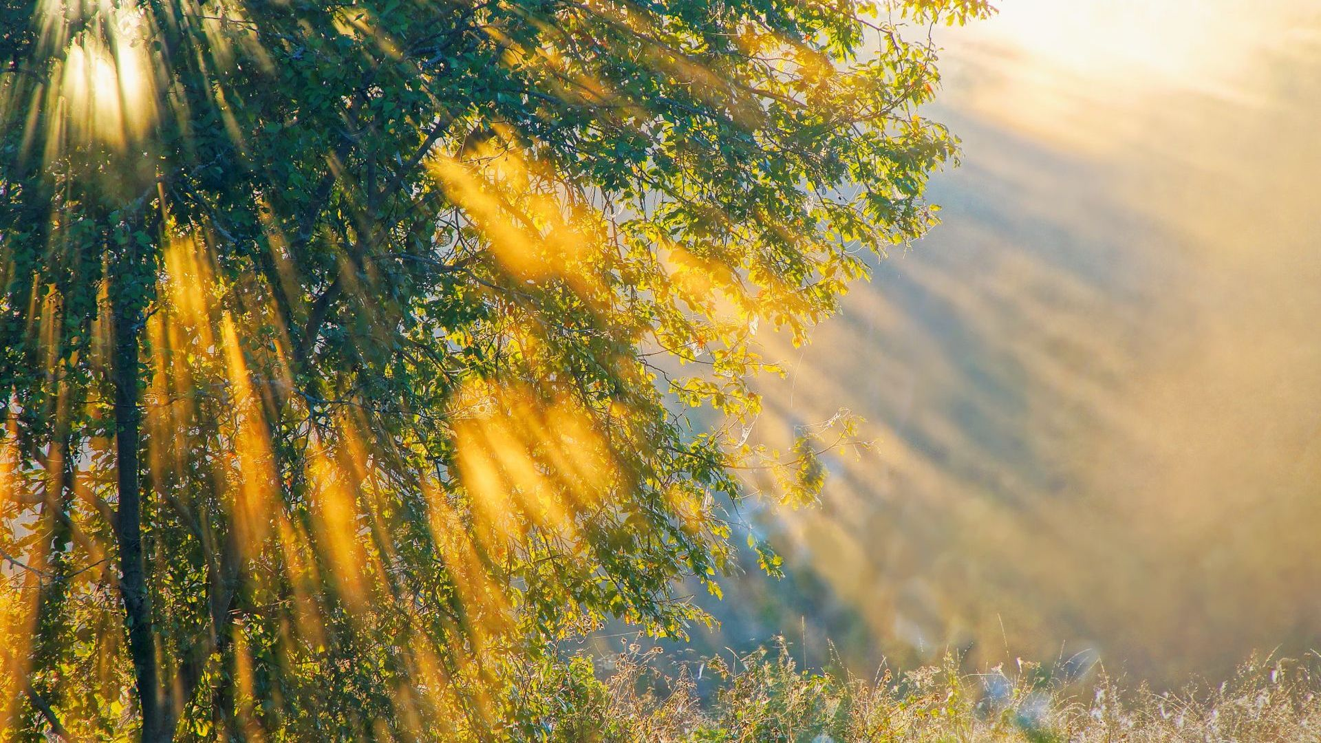 Sun Shining Wallpaper Wallpapersafari