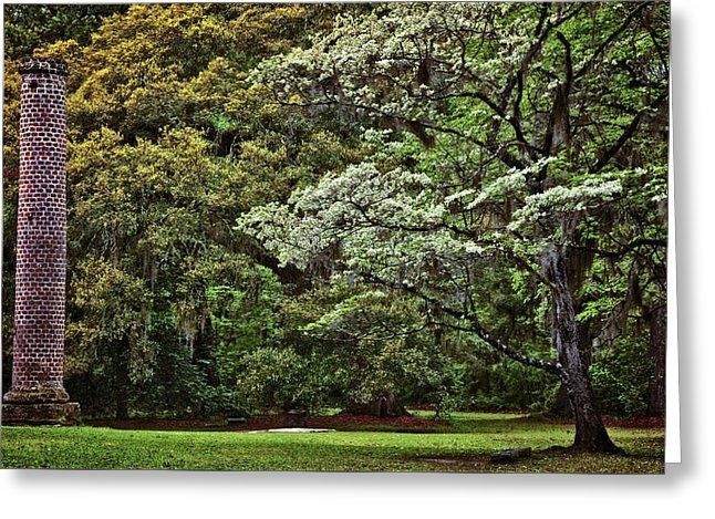 Low Country Spring Greeting Card by Diana Powell 646x469