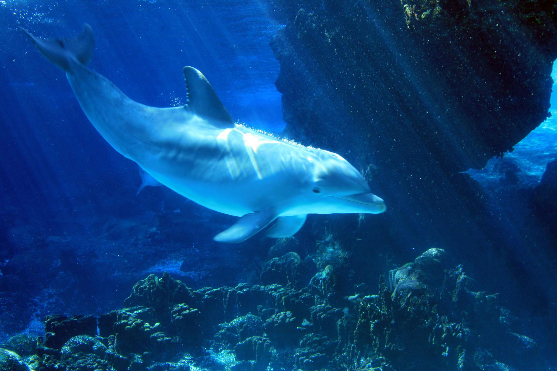 50+ Free 3D Dolphin Screensavers Wallpaper on ...