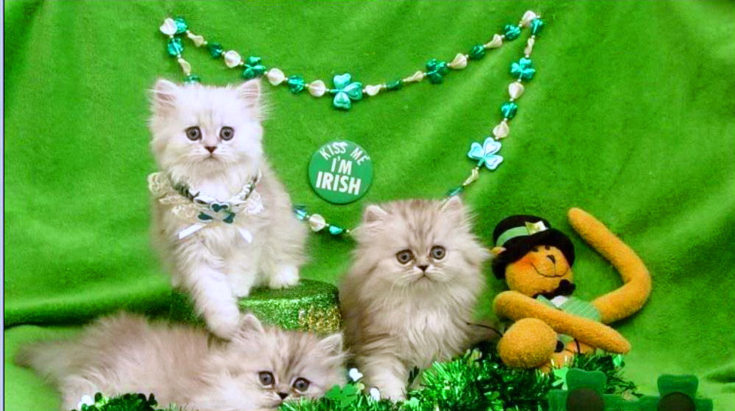 36] St Patricks Day Cat Wallpaper on WallpaperSafari 1071x600