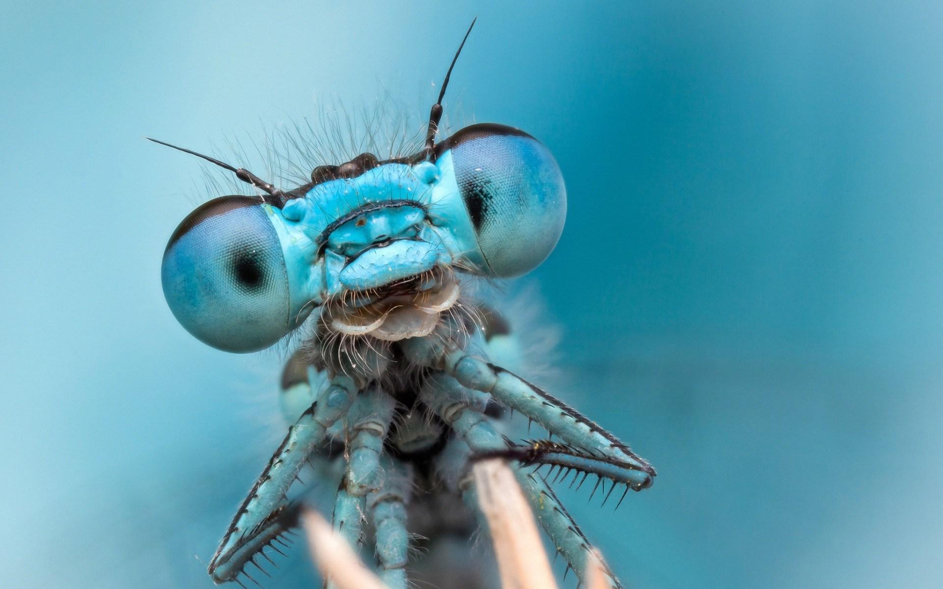 Глаза у стрекозы как сделать