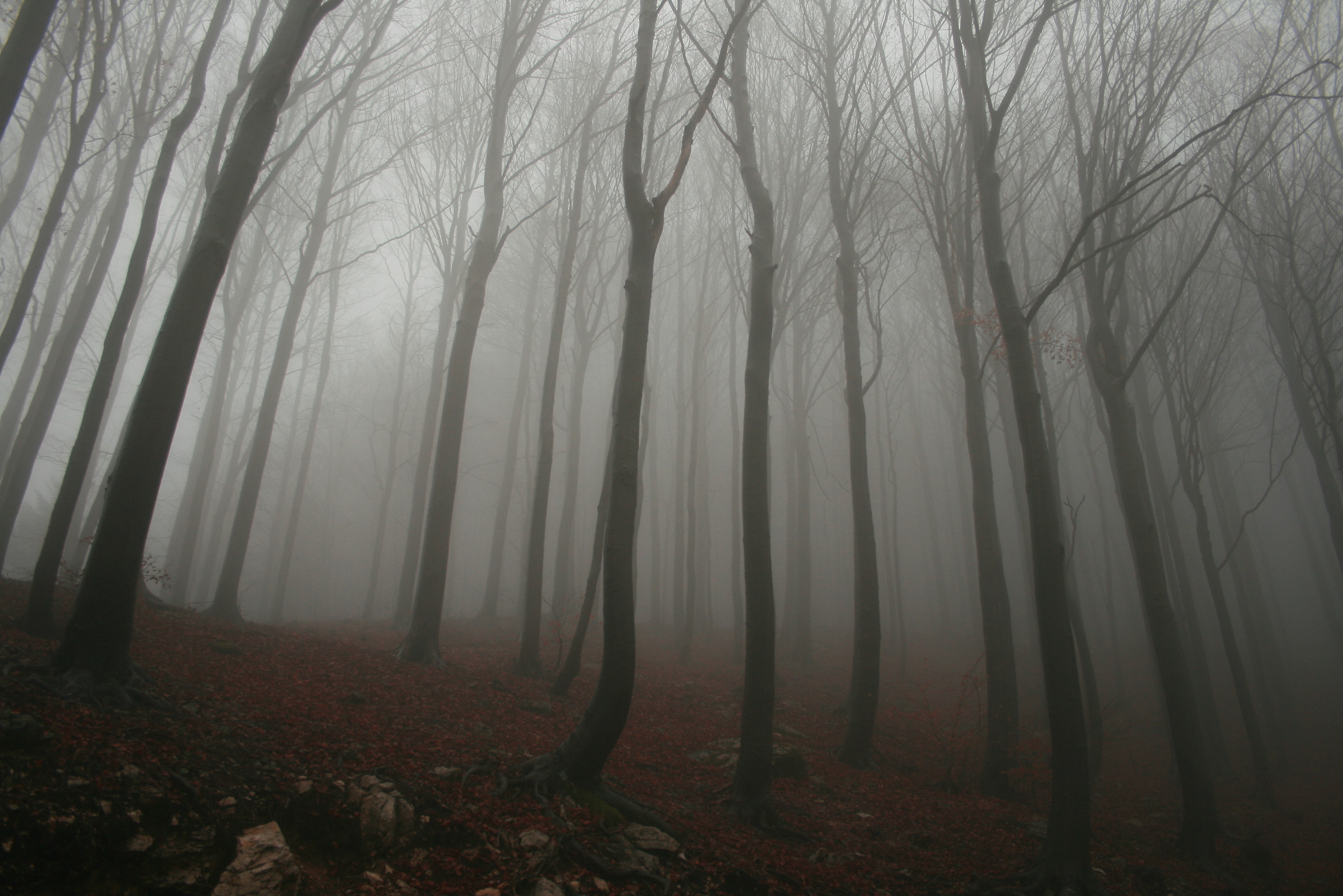 Foggy Forest Best Hd Wallpapers 2816x1880