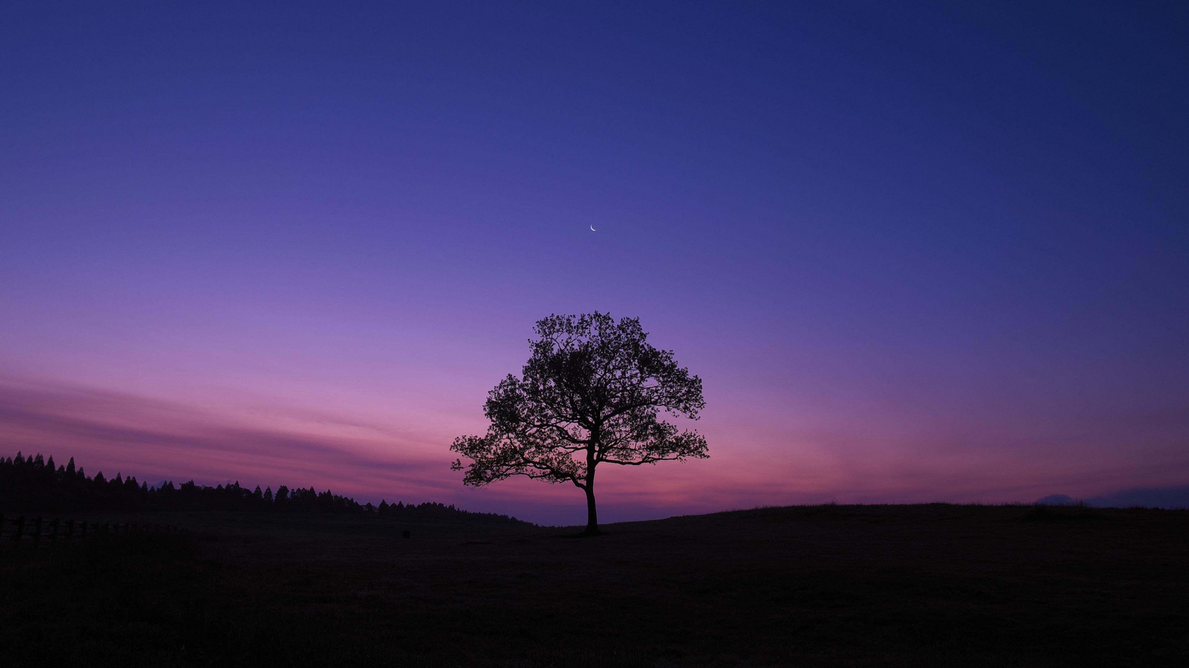 Дерево на фоне космоса