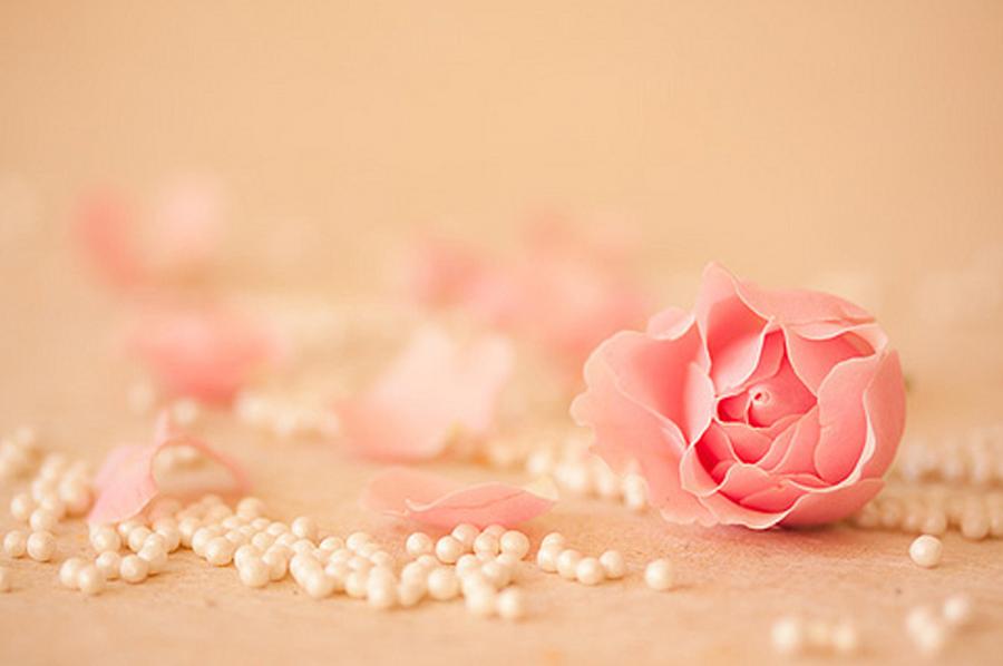 Wallpaper Rose Cute by Fatuu 900x598