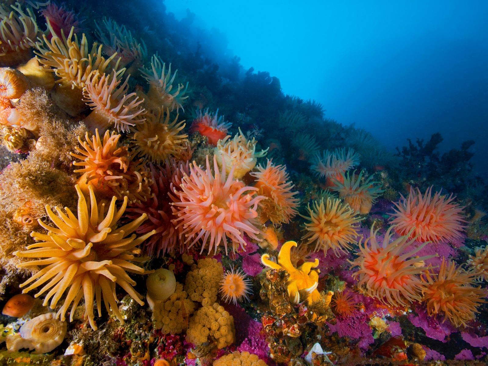 Underwater ocean sea anemones reef coral wallpaper 1600x1200 34839 1600x1200