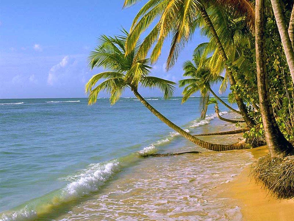beach beach beach beach 1024x768