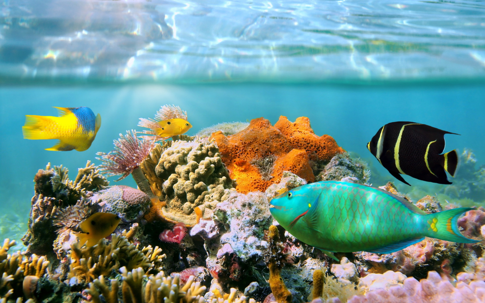 Coral Reef Wallpaper for Widescreen Desktop PC 1680x1050 1680x1050
