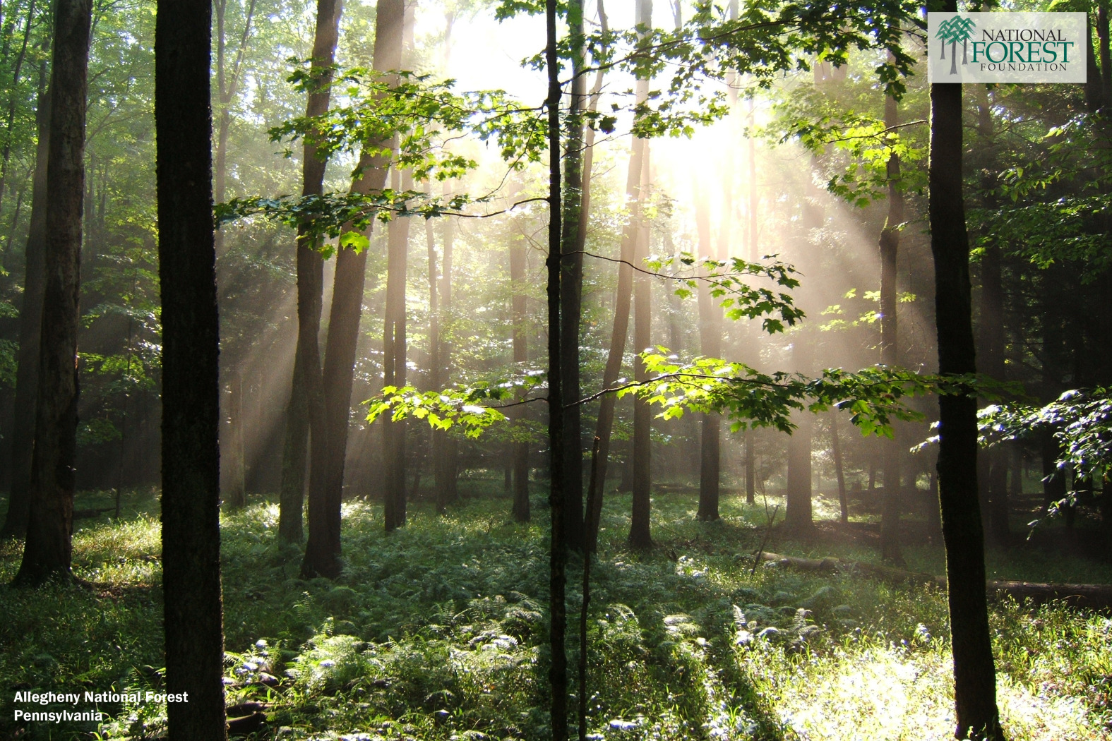 Desktop Backgrounds   National Forest Foundation 1575x1050