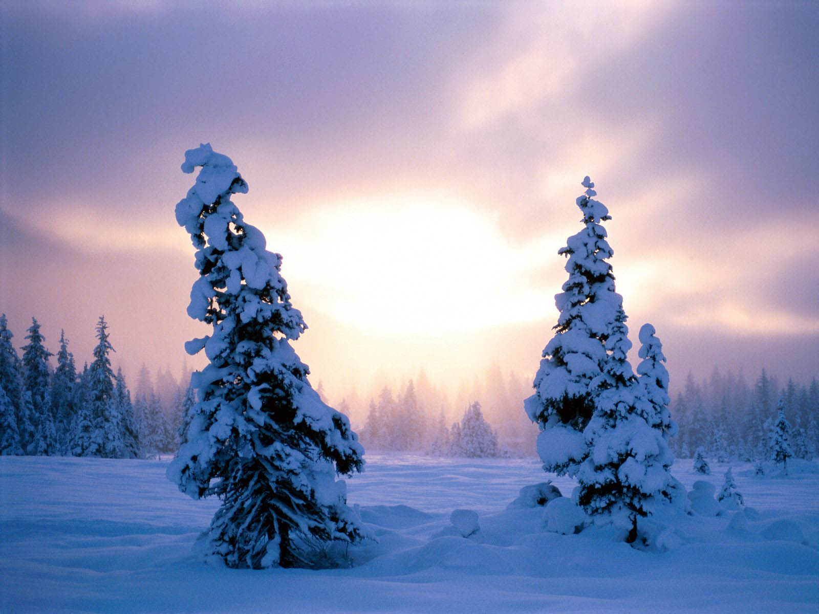 wallpapers Winter Backgrounds 1600x1200