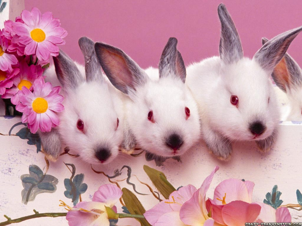 cute bunnies easter wallpaper 1024x768