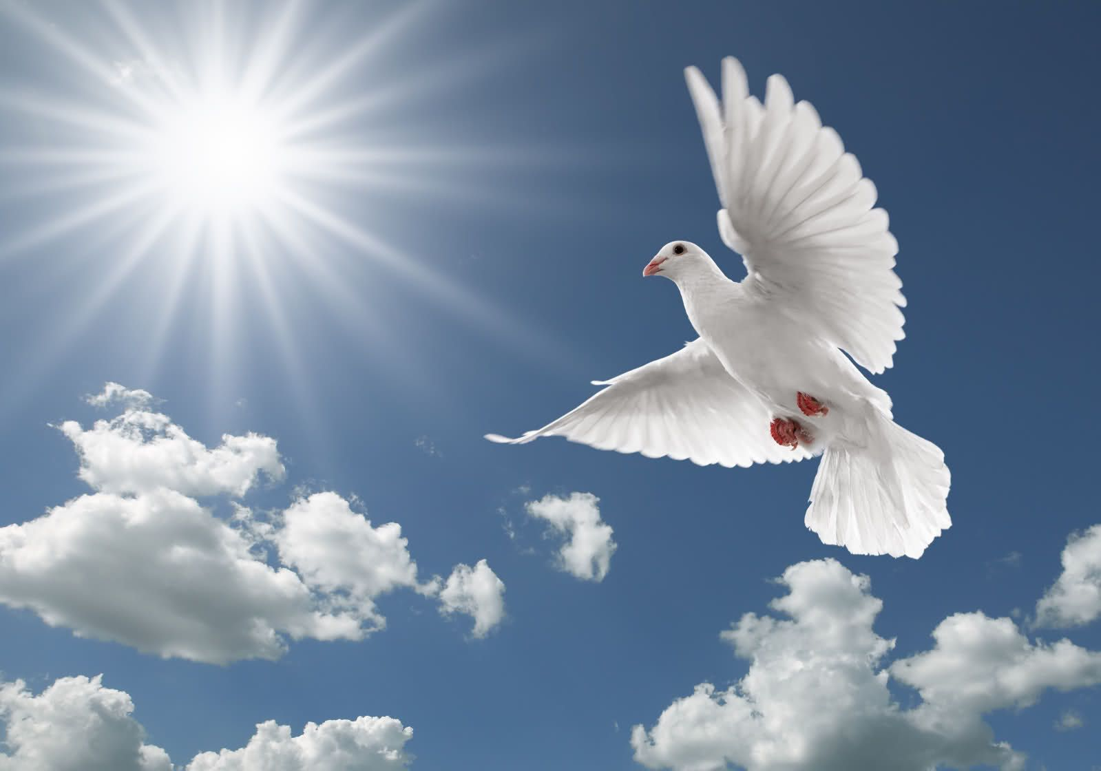 Flying Birds Wallpapers   HD wallpapers n birds Dove flying 1599x1120