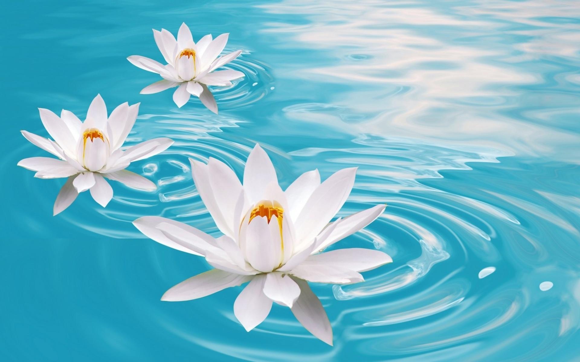 Bokeh mood zen flowers water relax wallpaper 1920x1200 29609 1920x1200
