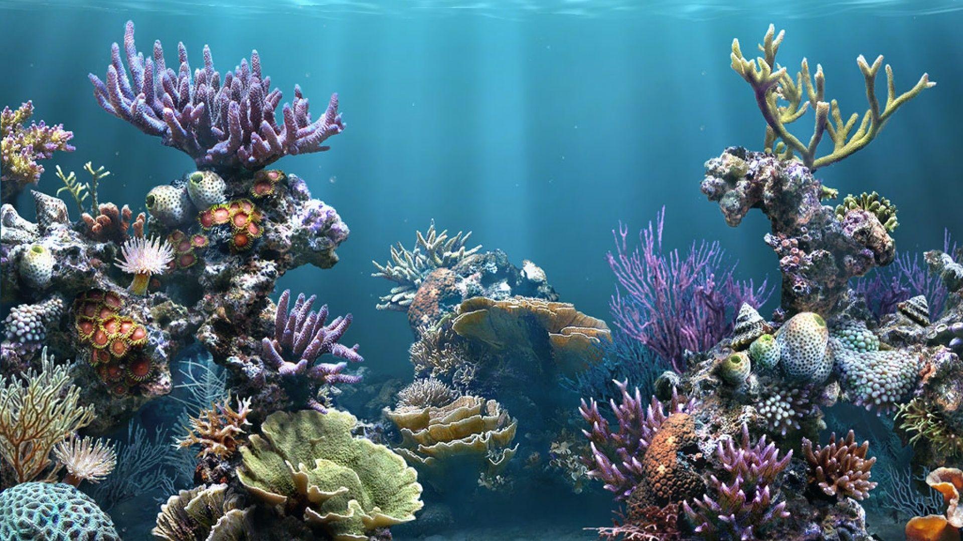 Animated aquarium desktop wallpaper wallpapersafari for Animated fish tank