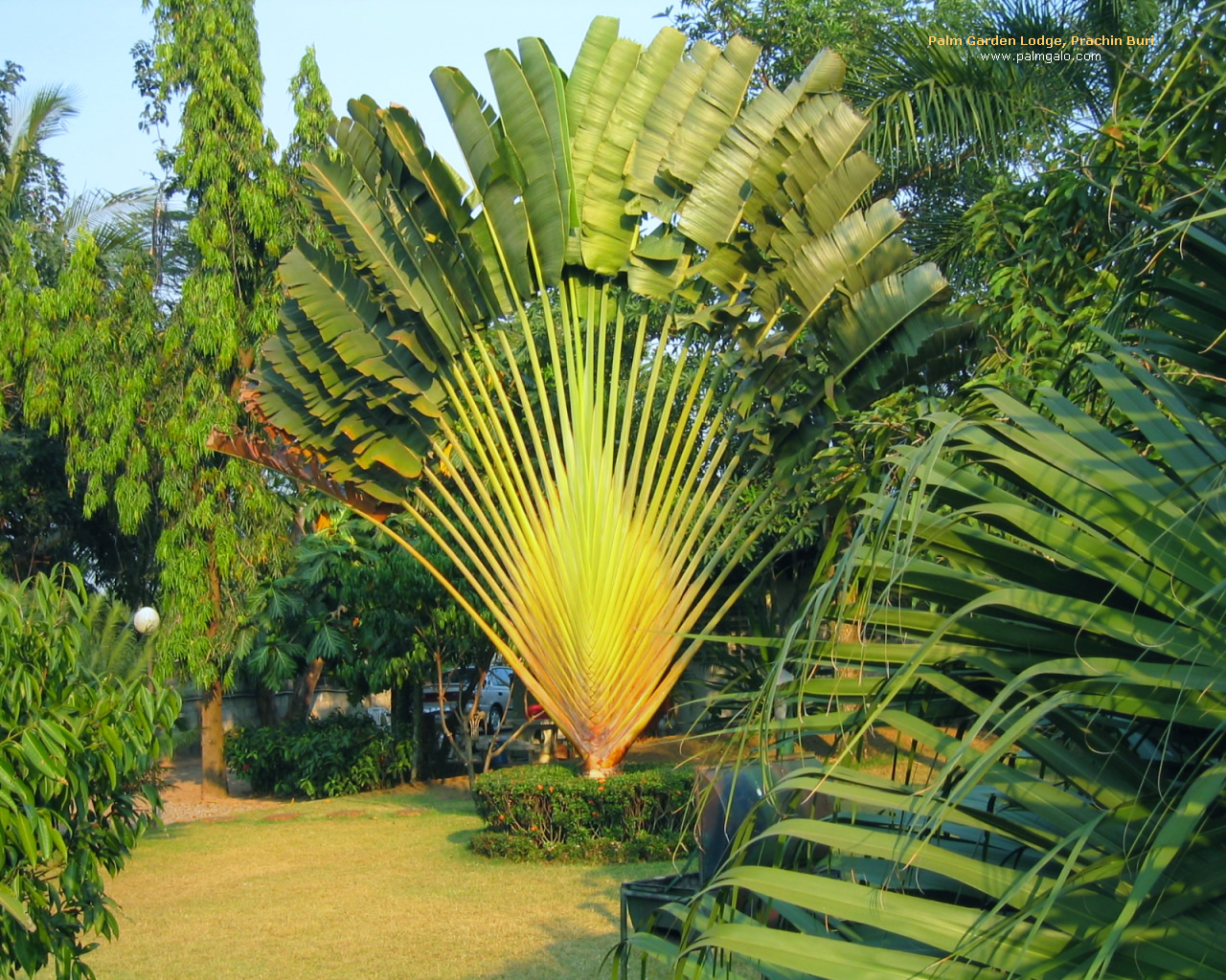 Wallpaper Palm Garden Lodge Prachin Buri   Banana Tree Palmgalo 1280x1024