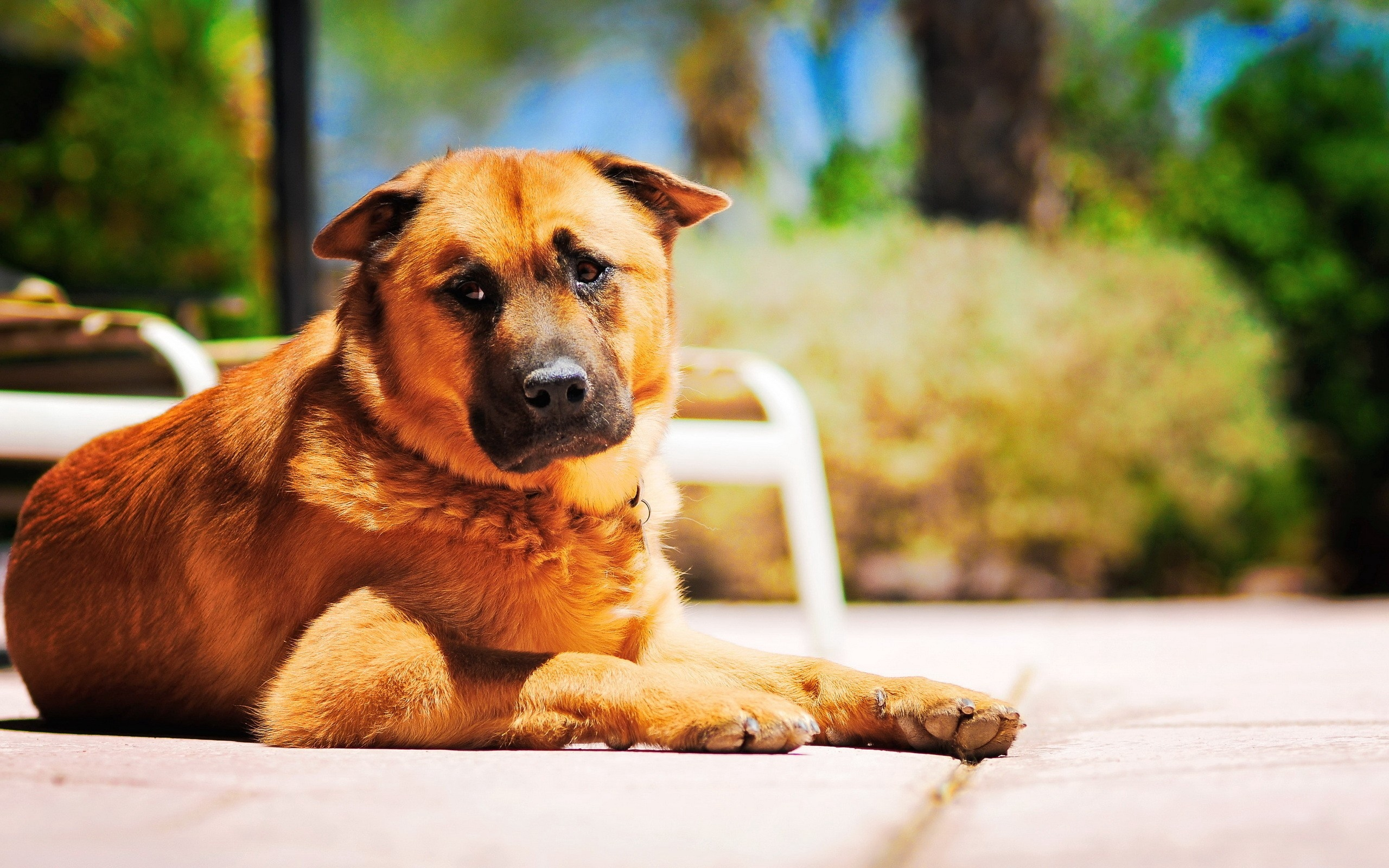 Dog Lie Down Sadness Grief Road   Stock Photos Images HD 2560x1600