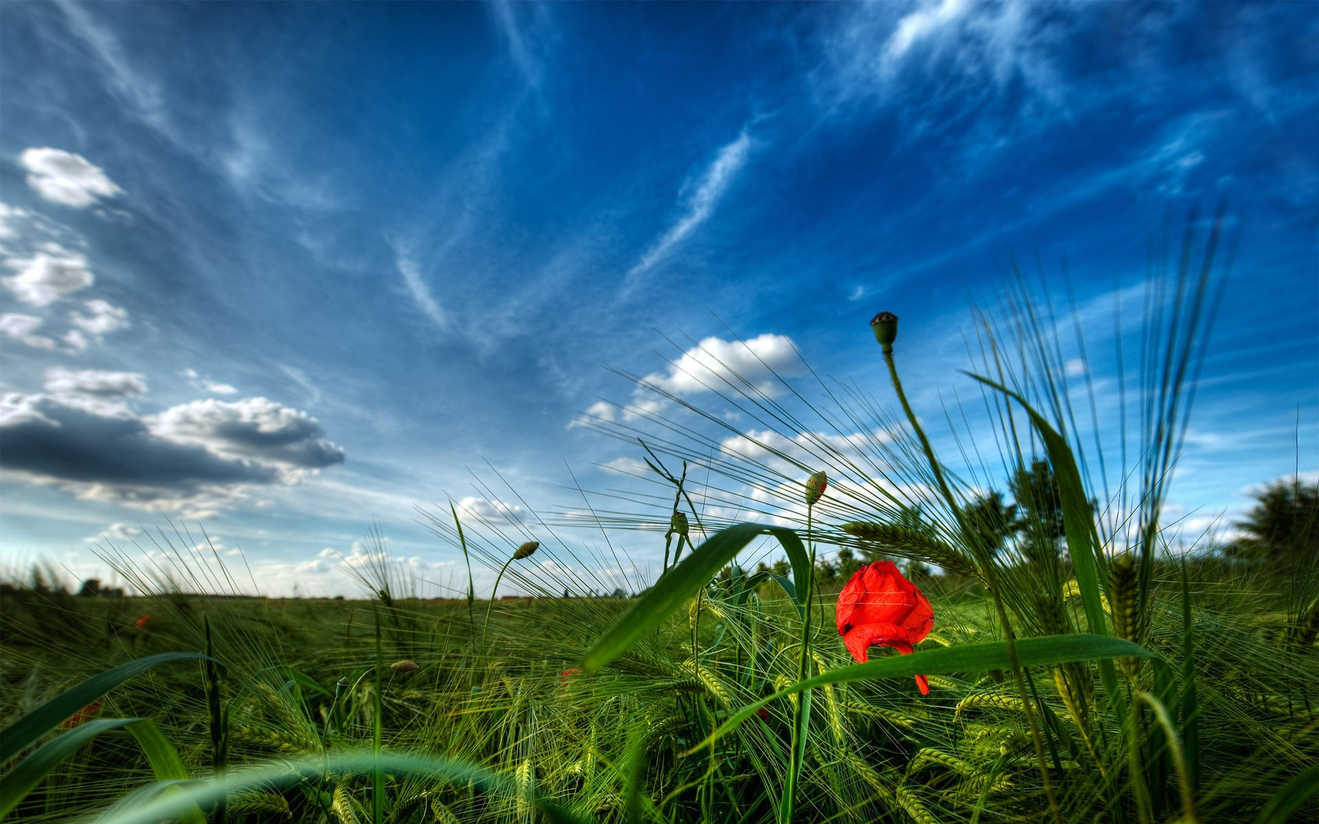 Hd wallpaper sites - Daily Wallpaper Poppy Fields I Like To Waste My Time