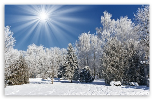 Which would describe you best   Weather  Temperature sun sunlight 510x330