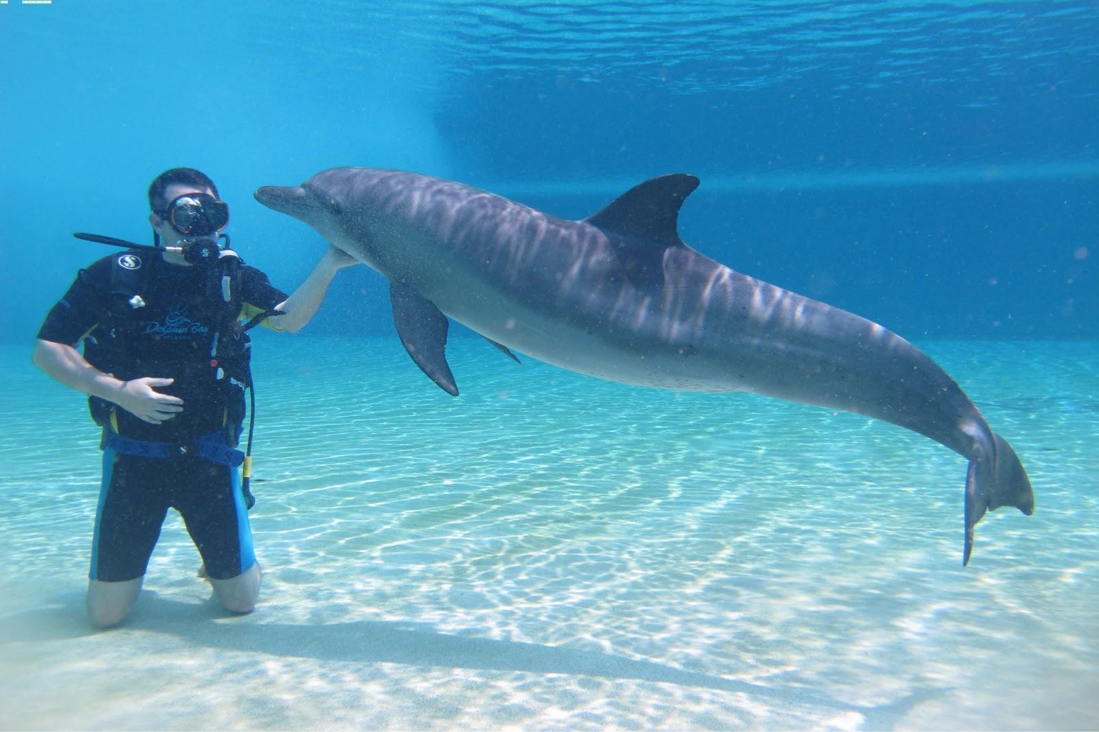 dolphin dolphin dolphin 1600x1066