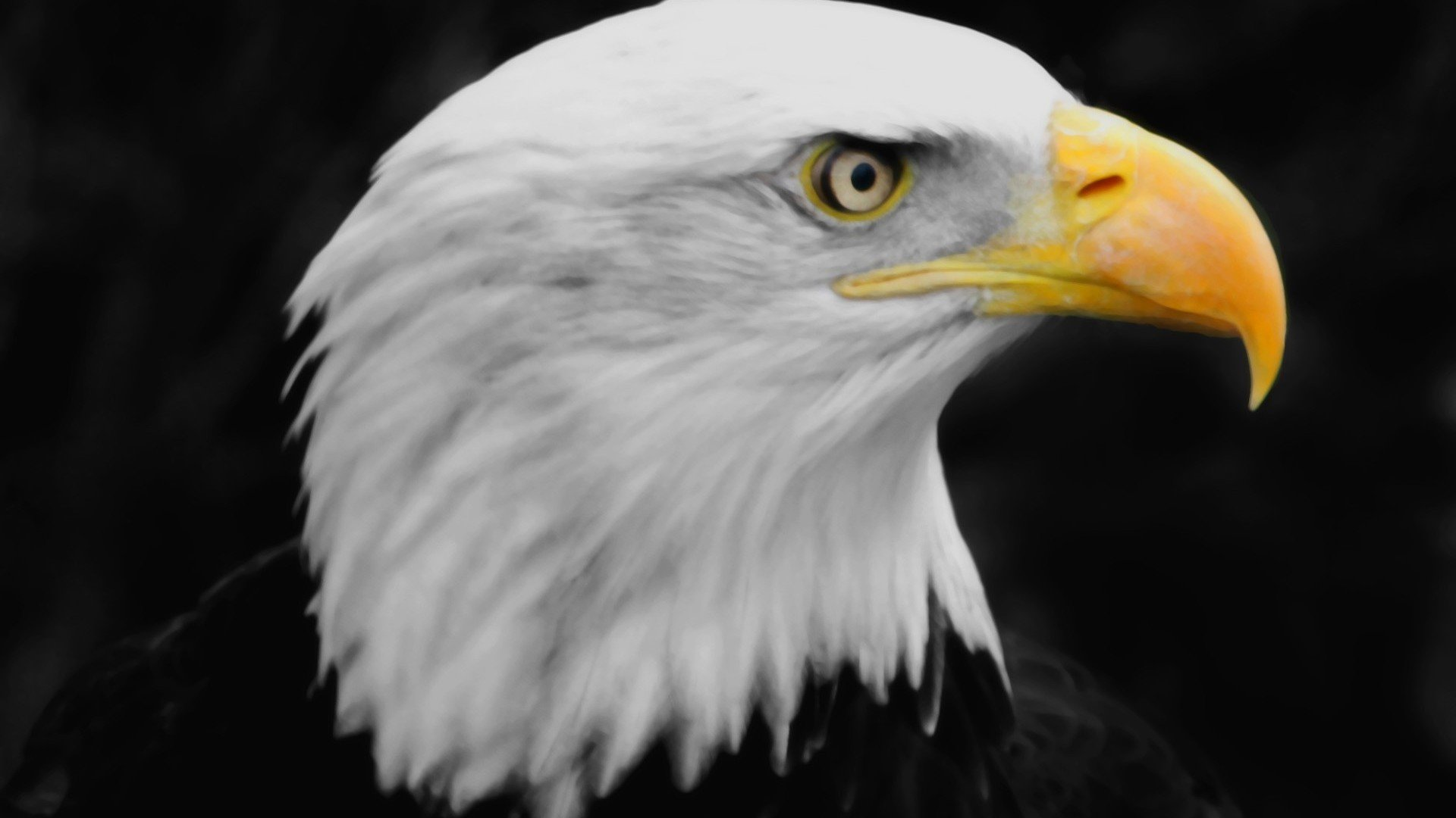 Golden Eagle Wallpaper - WallpaperSafari