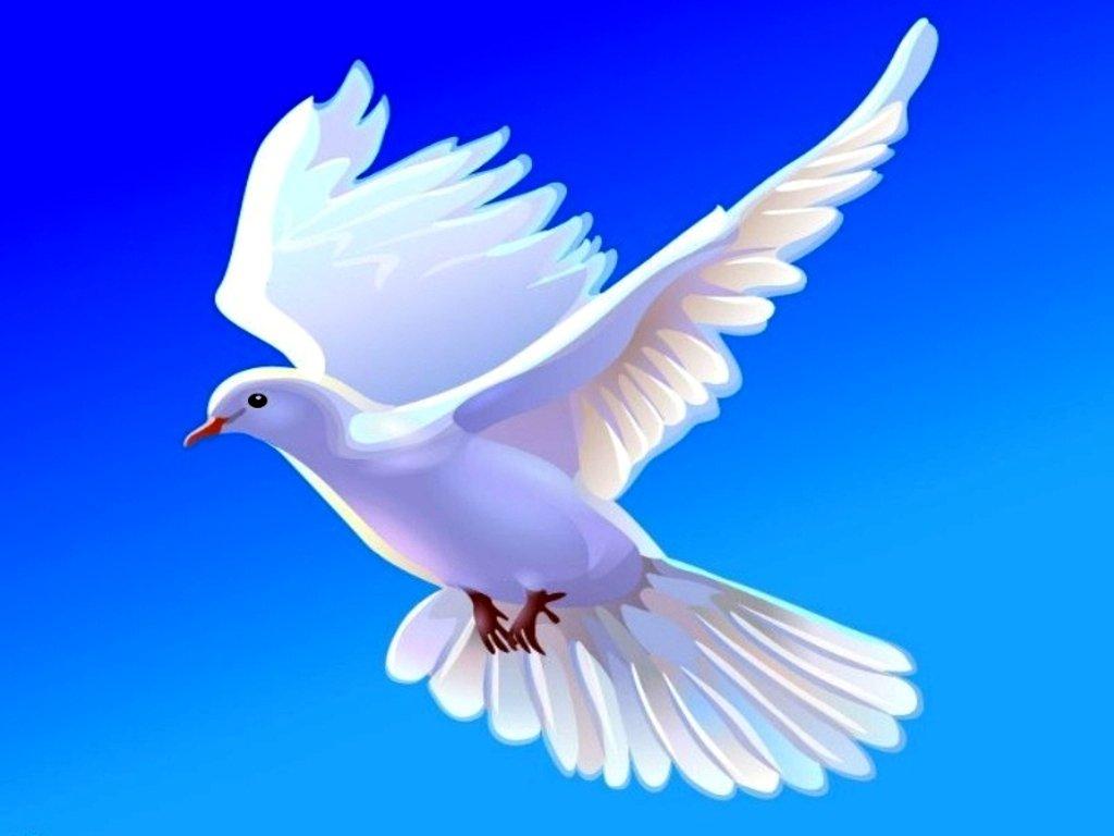 Dove   Doves Wallpaper 38537875 1024x768