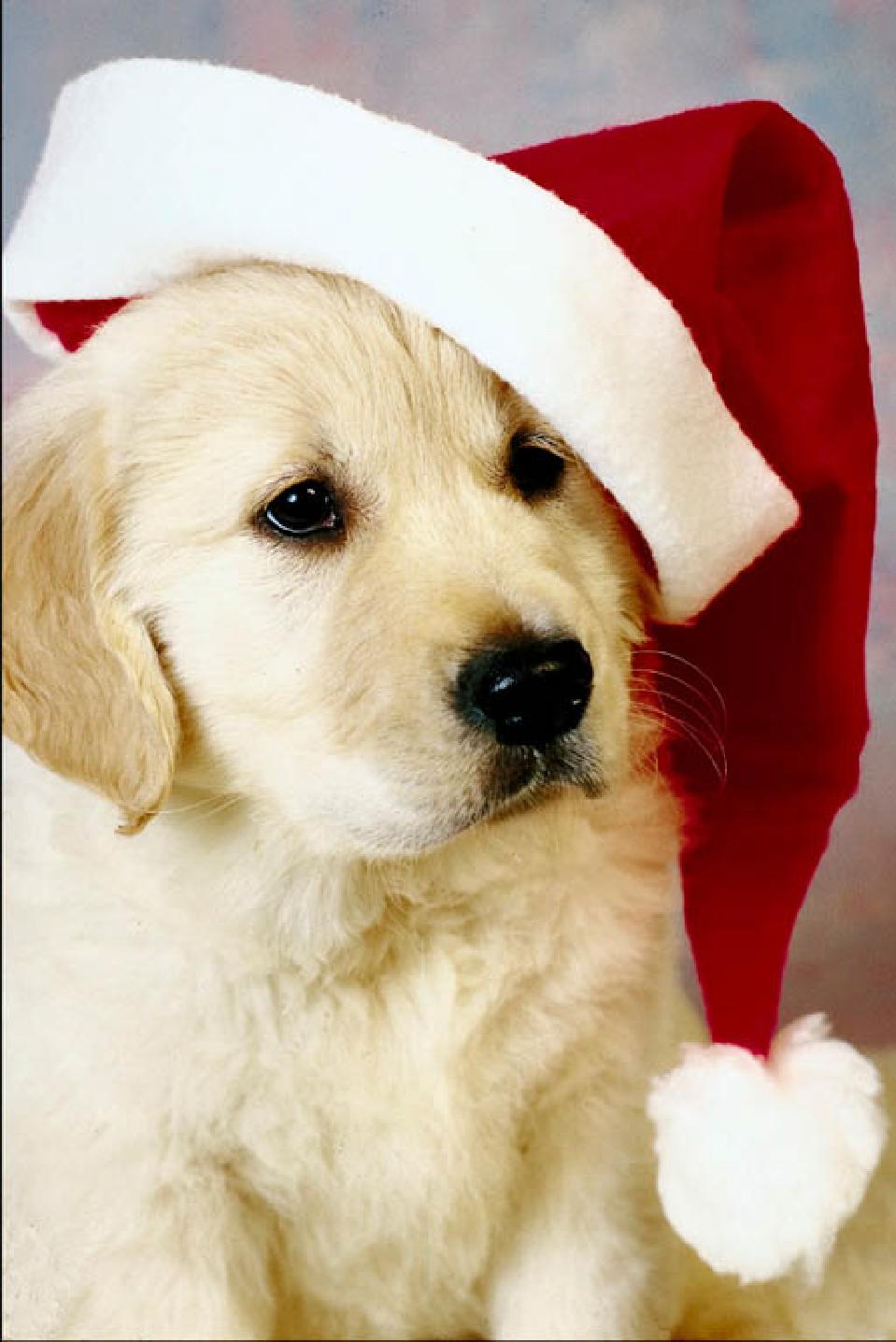 46+] Christmas Puppy Wallpaper for Computer on WallpaperSafari