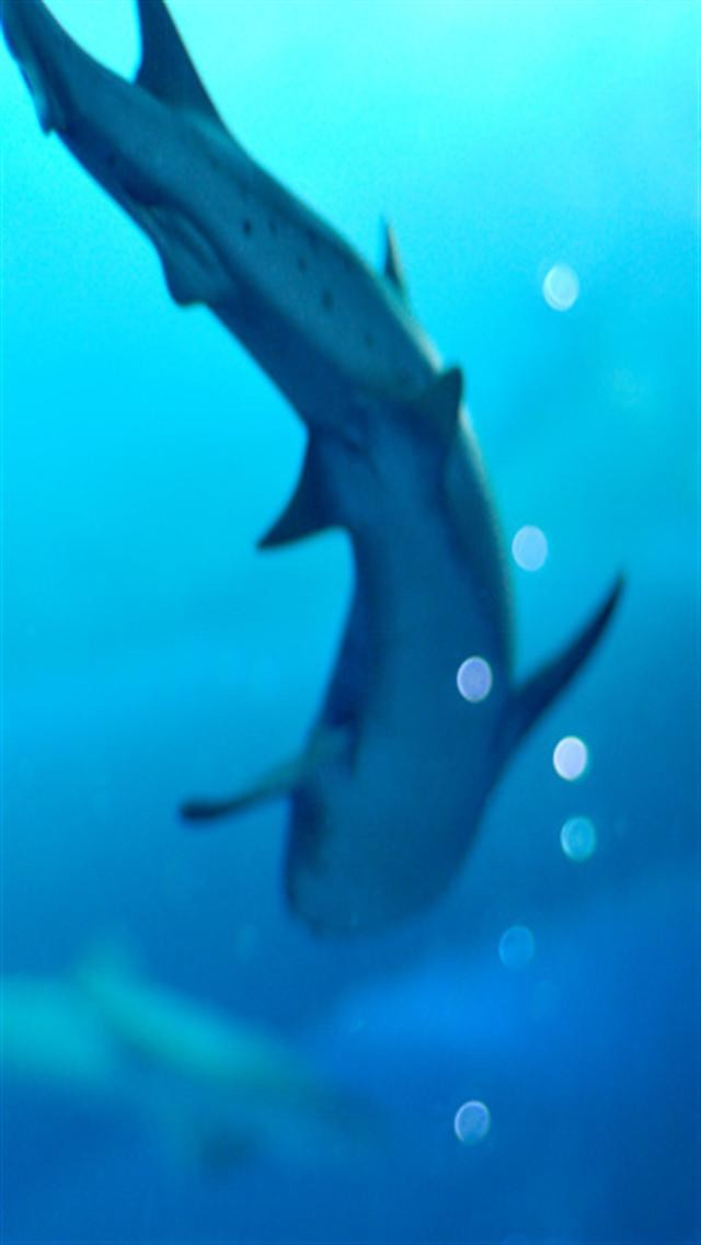 Shark Animal iPhone Wallpapers iPhone 5s4s3G Wallpapers 640x1136