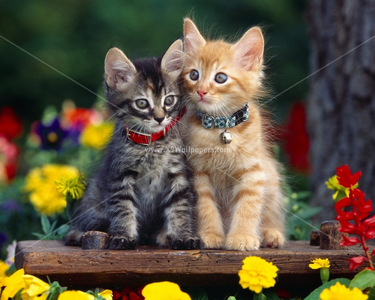 50 Cute and Beautiful Cats and Dogs HD Wallpapers and 1280x1024