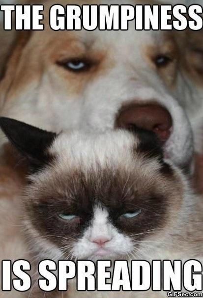Grumpy cat and grumpy dog 1jpg 413x607