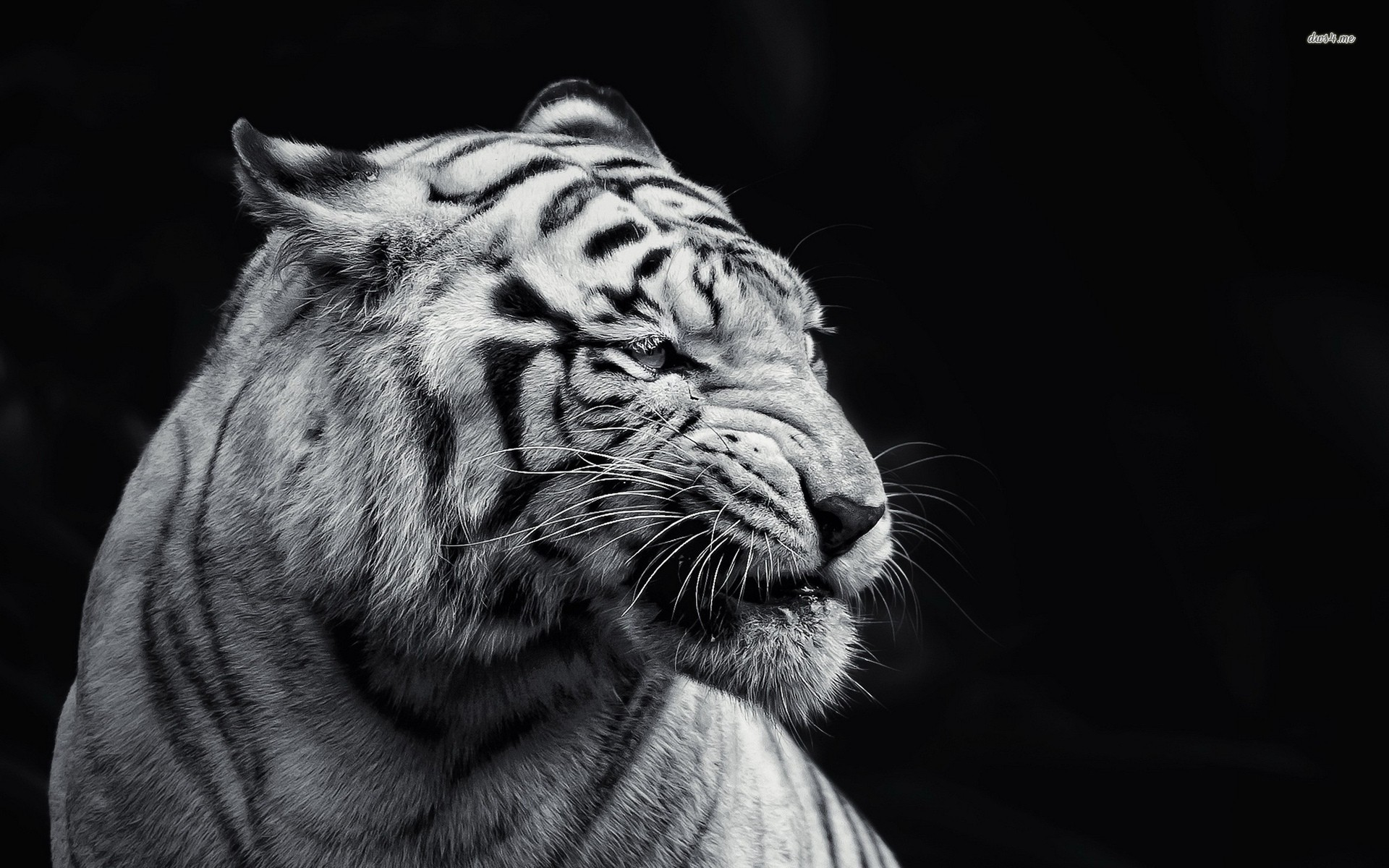 Black And White Animal Wallpaper - WallpaperSafari