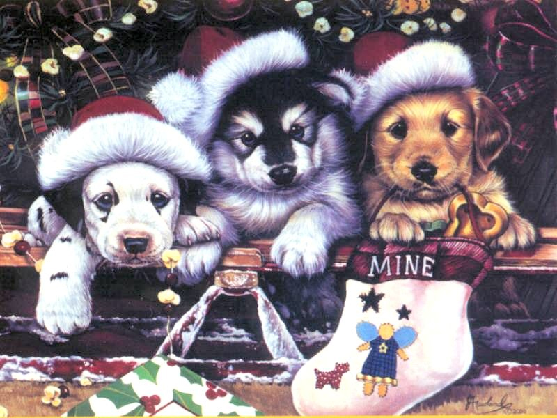 Christmas Wallpapers Christmas Puppy Wallpapers 800x600