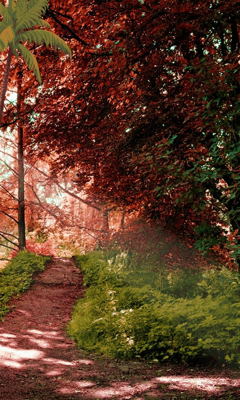 Download Nature Wallpaper for your Android phone 480x800