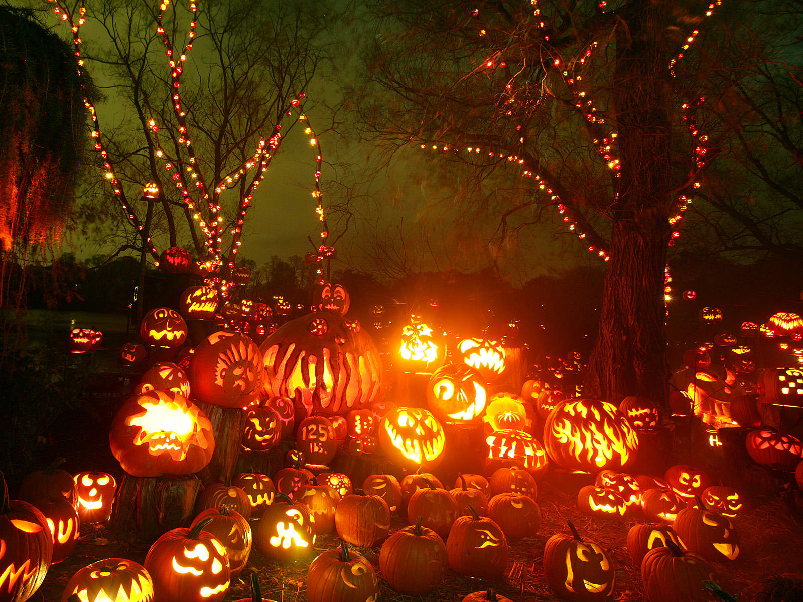 Halloween Pumpkin Backgrounds 1600x1200